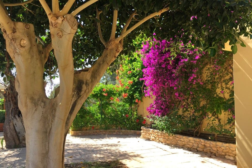 Pretty flowers growing at Olivos