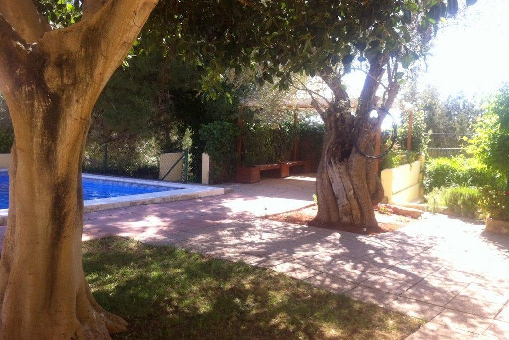 Lovely Olive tress near to pool at Los Olivos