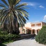 large Palm tree in garden at Villa Paquita
