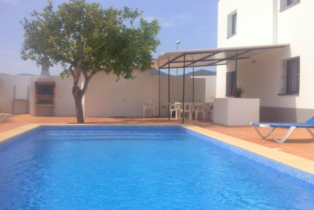 Typical tree of Ibiza located by pool